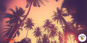 mal sa summer 29516